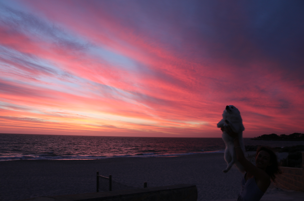 Purple, blue, pink and soft yellow lighting up the sky over the ocean as Tegan holds a fluffy japanese spitz simba style