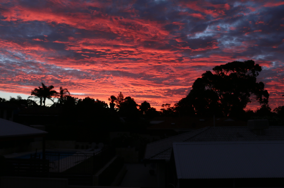 Dark shadowed trees, bright red clouds, looks like the sky is on fire