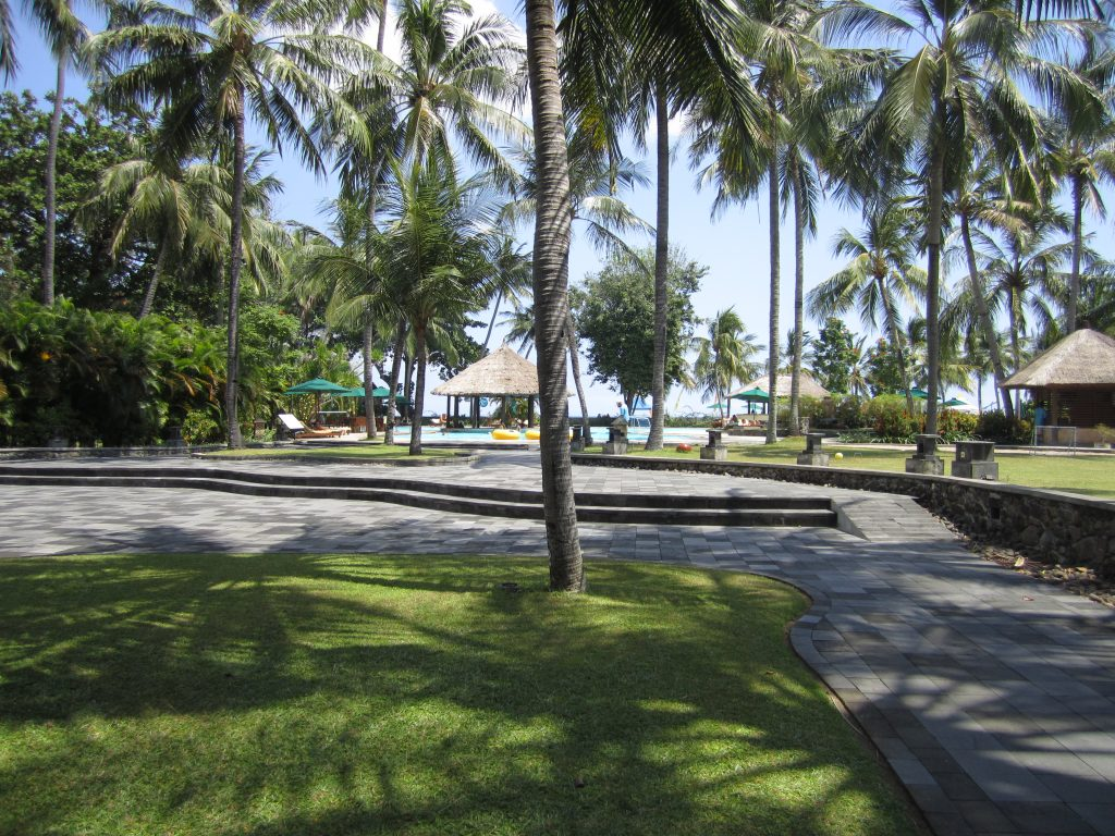 Palm trees, grass and the footpath between accommodation and the pool area
