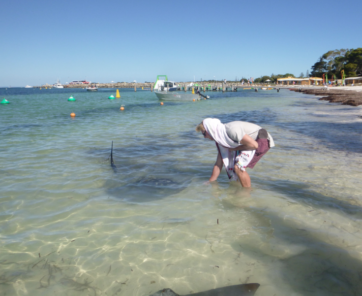 Dan hand feeding a HUGE stingray in the shallows near where the ferry arrives