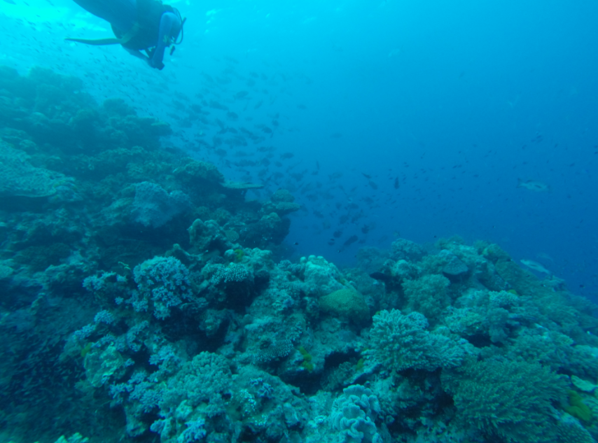 Heapssss of coral and fishes swimming around the big bommies