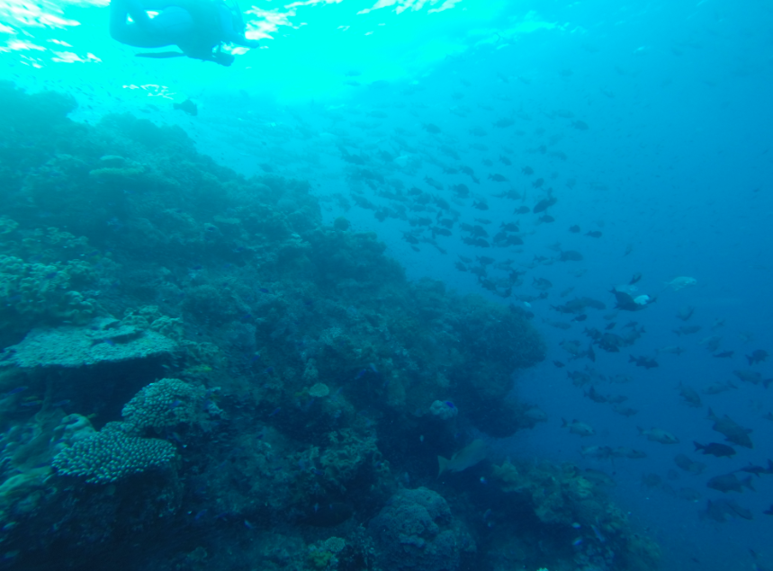 School of fish swimming alongside the coral
