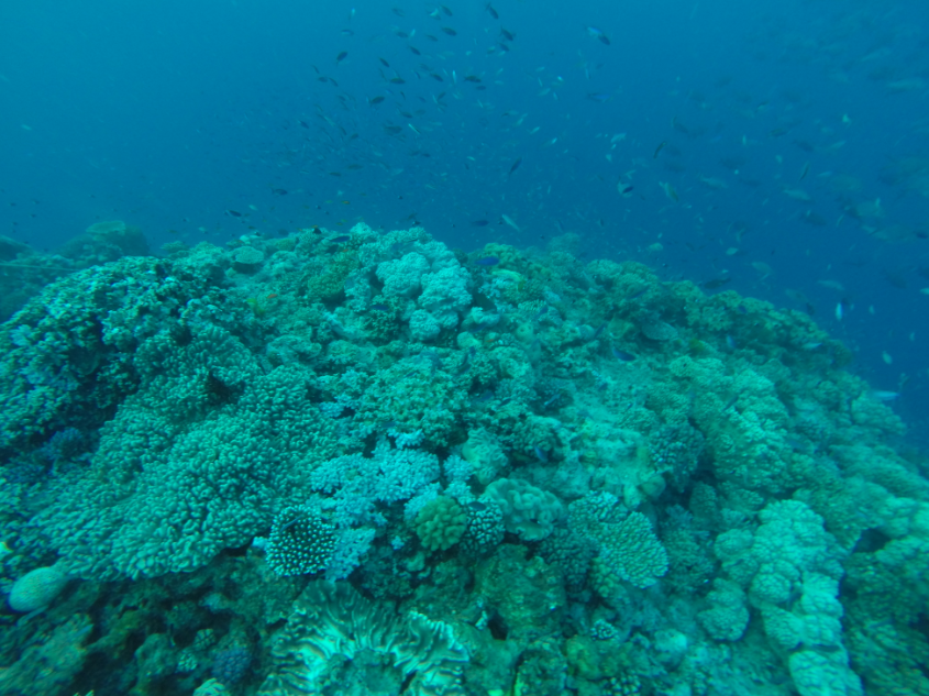 Coral of all shapes and sizes, a school of fish swimming in the background