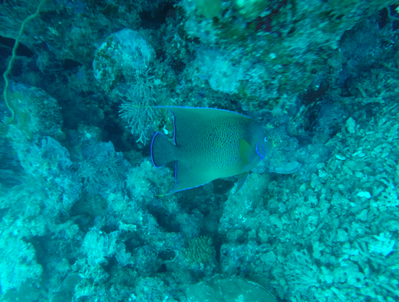 Fish with a blue around the tail and head