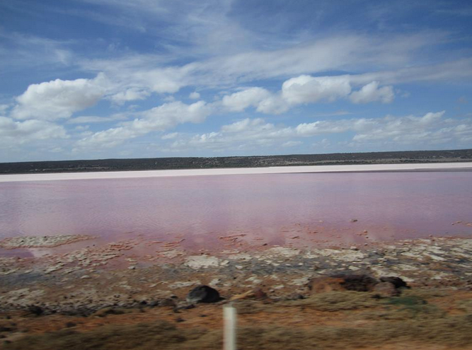 The pink lake at Port Gregory, bright pink lake contrasting well with the white sand in the background, line of grass and blue skies dotted with clouds