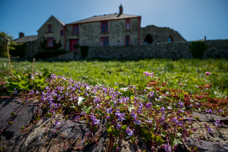 Crisp clear image of tiny flowers in the foreground, vibrant green grass in the middle and a cottage with red windows in the background.