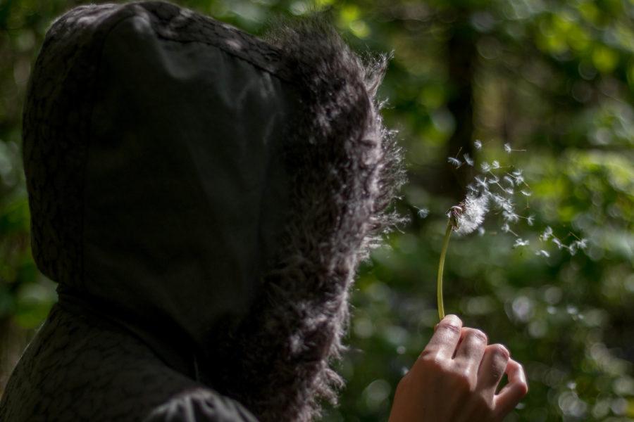 Close up of Tegan blowing a dandelion, half blown off.