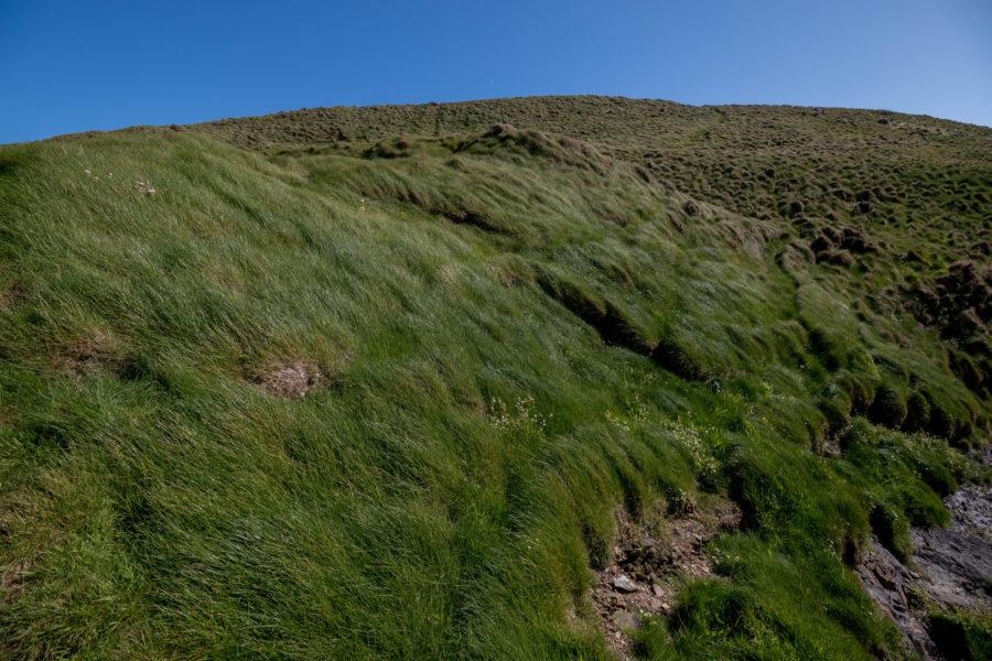 Lush green grass in one of many fields on the coastal trek