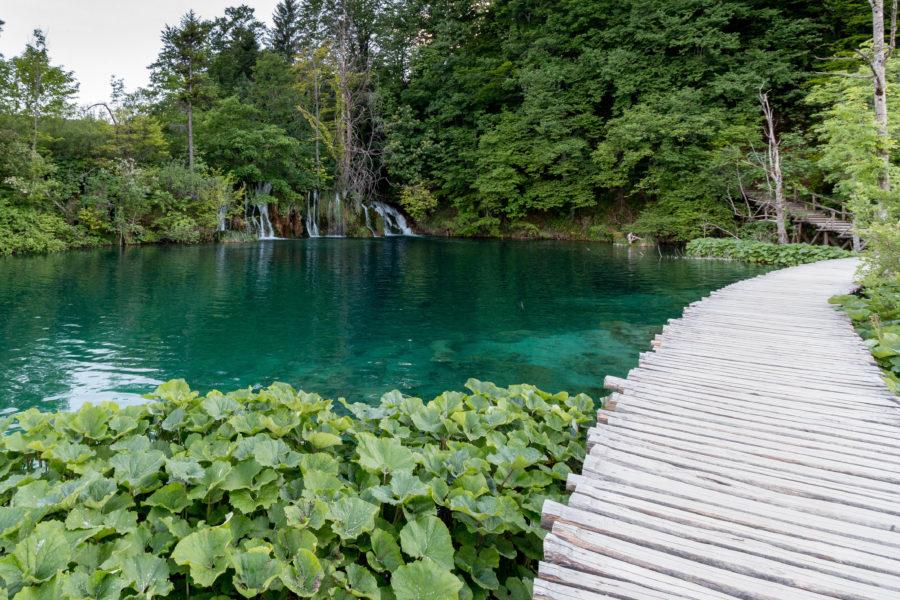 Calm lake and vibrant green trees,