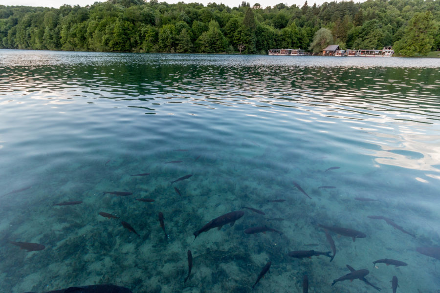 Water so clear that you can see the fish below