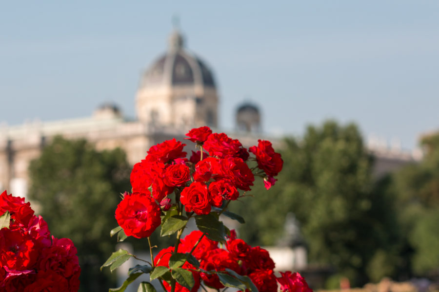 Red roses in the foreground, blurred top of a palace behind