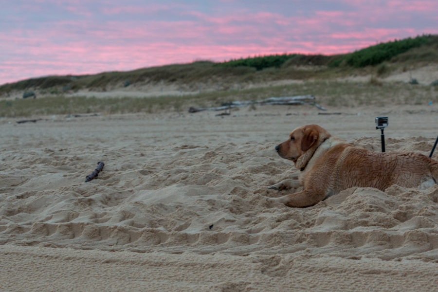 Watching the sunrise with a local dog at the beach
