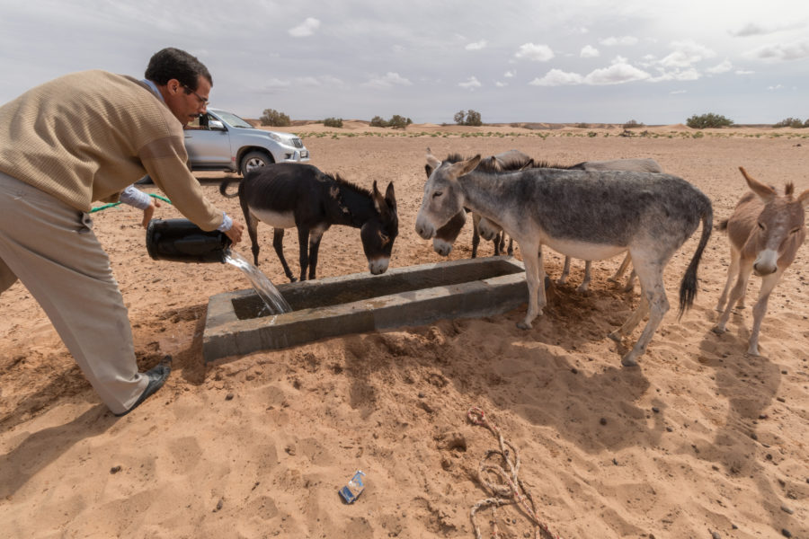 Giving the nomads' donkeys water from the well