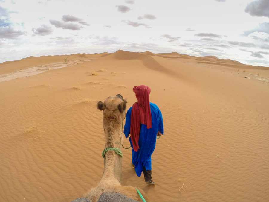 Saharian leading the camels