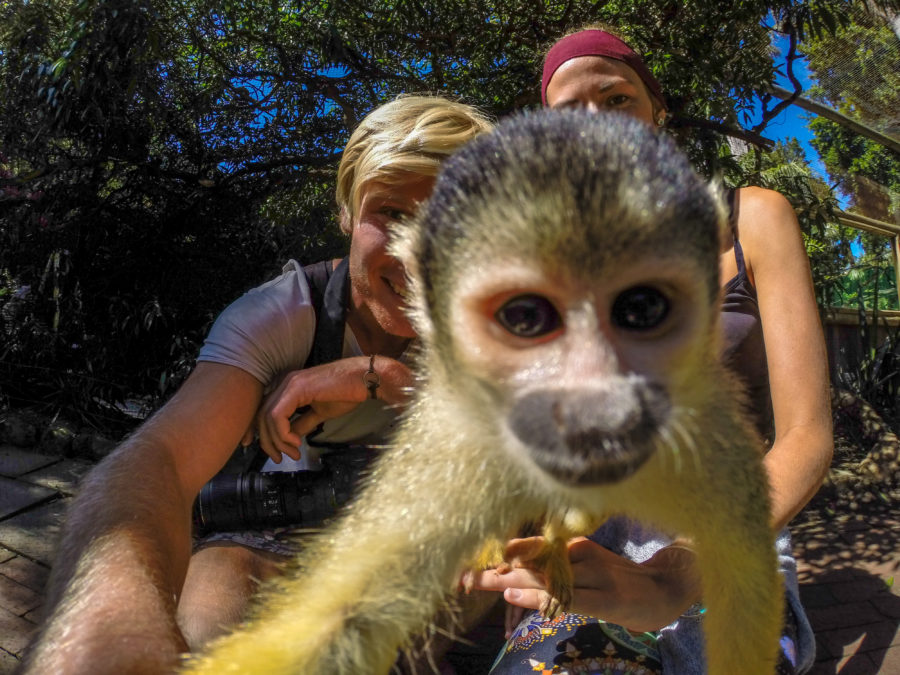 Monkey taking a selfie