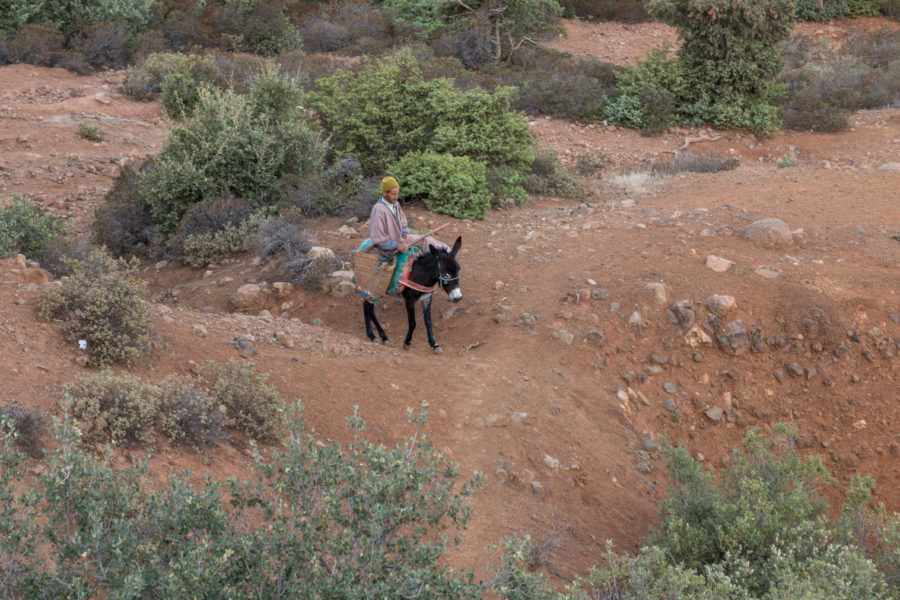Guy riding his donkey