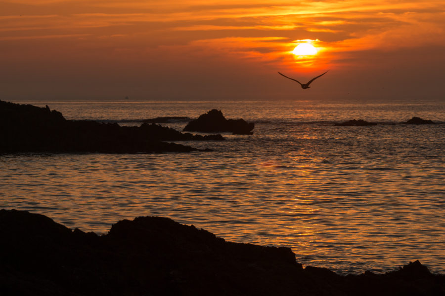 Sunset over the ocean, bird flying under the sun so it looks like the sun is on its back