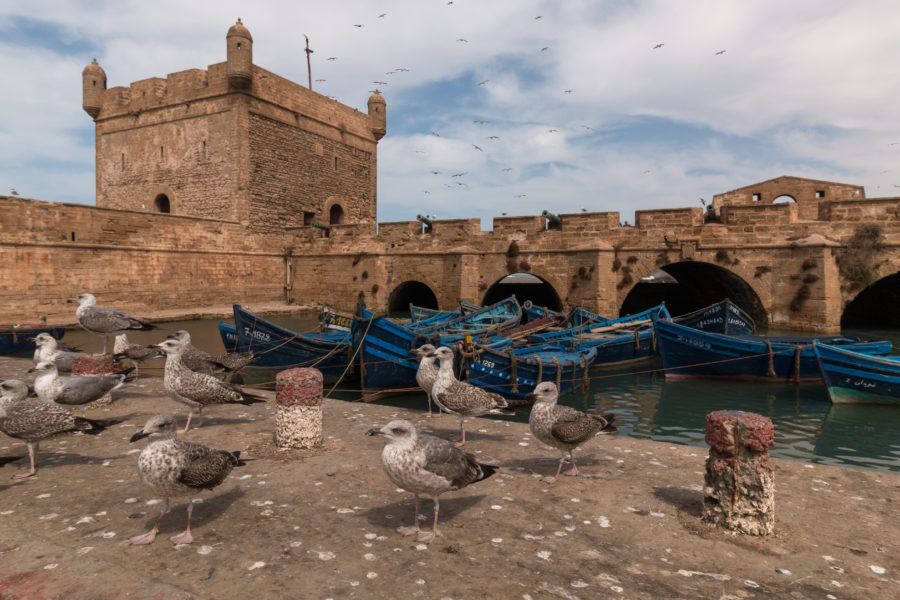 Seagulls and boats of the medina