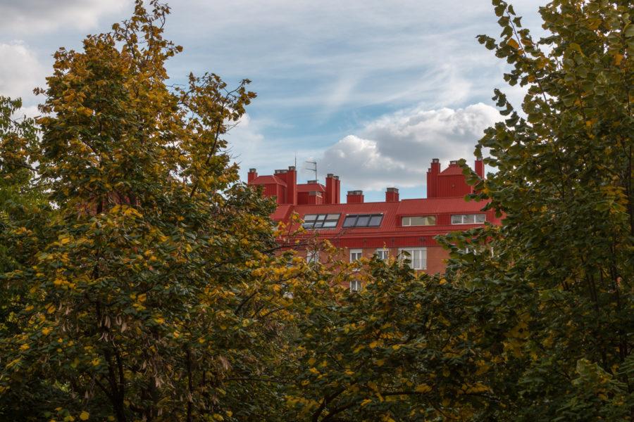 Madrid buildings poking through the foliage