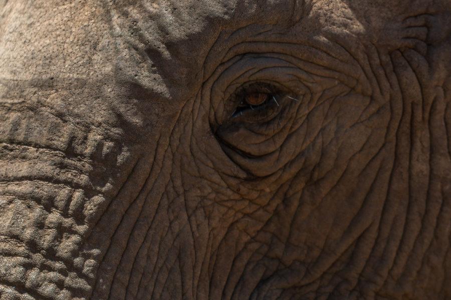 Upclose elephant eye, so many wrinkles