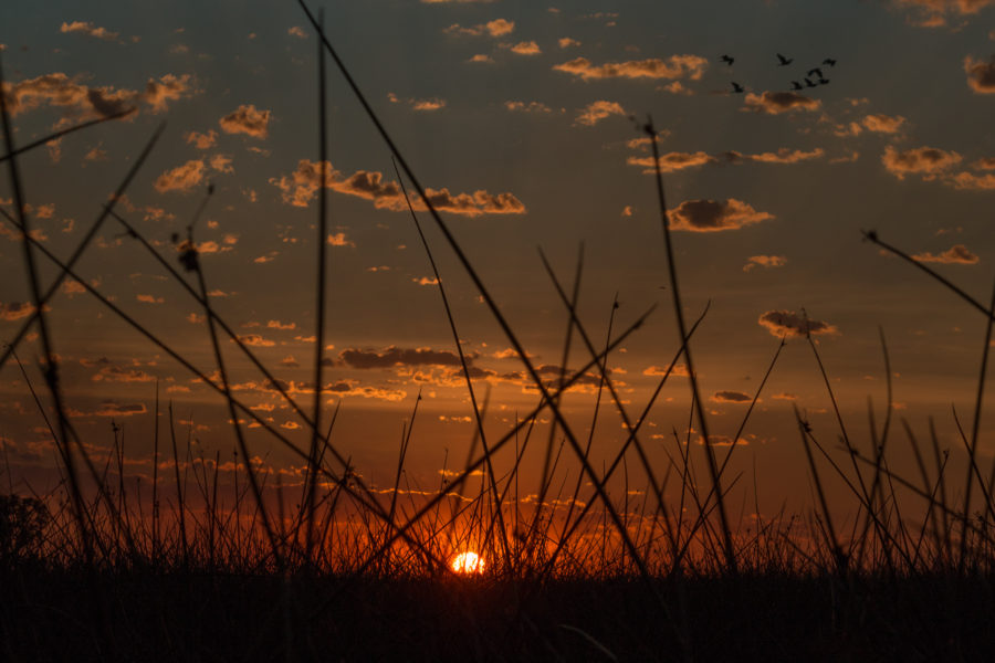 Sunset through the reeds