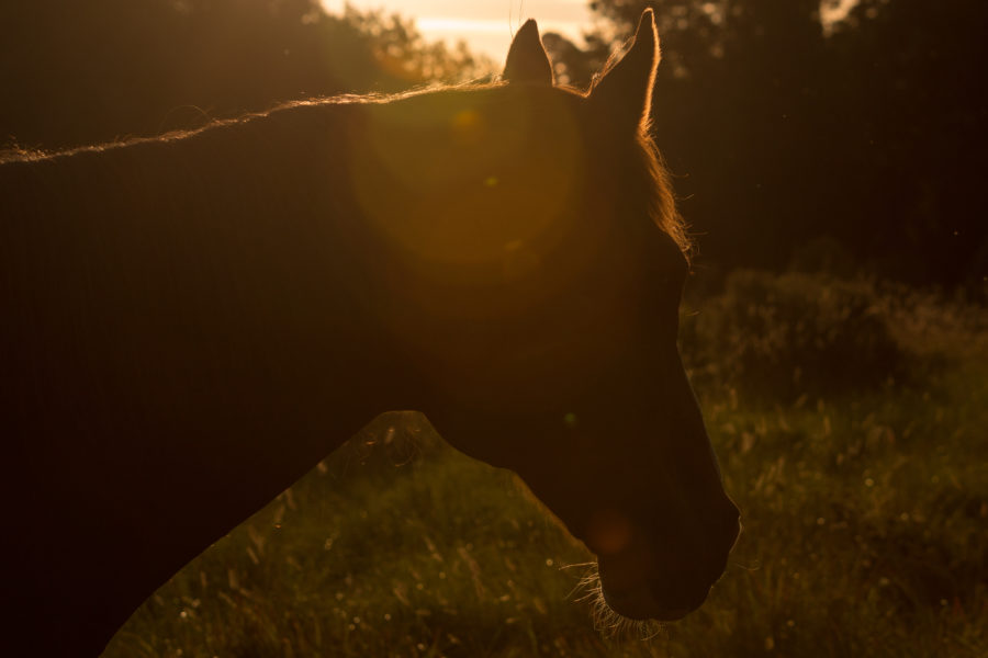 Horse side on profile, sun spots and glowing orange