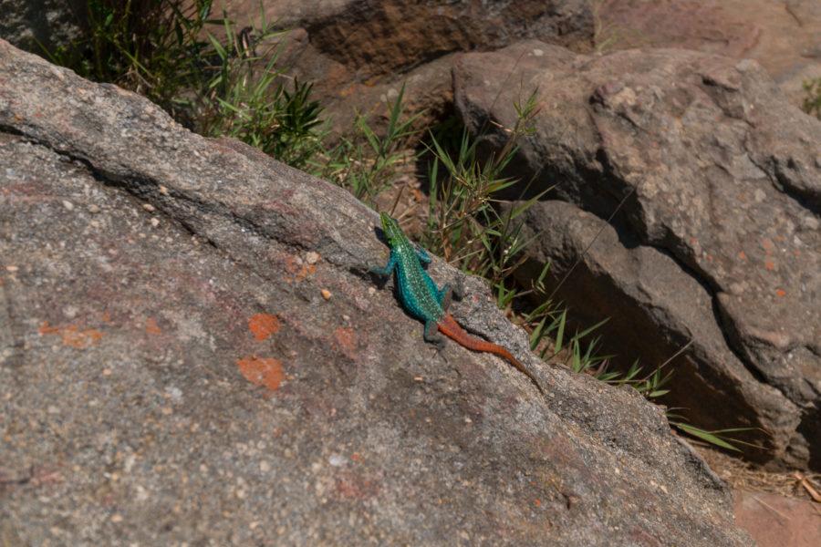 Bright green lizard on a rock