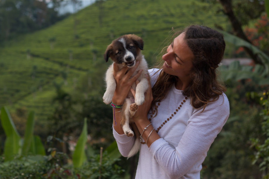 Tegs and boma the puppy, tea bushes in the background