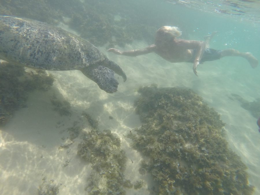 Dan swimming after turtles