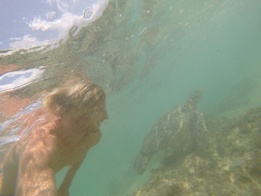 Dan swimming with the turtles