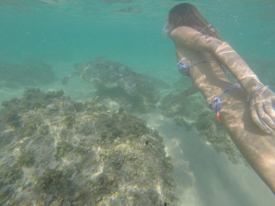Tegan swimming with the turtles
