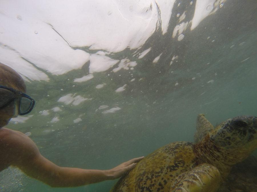 Dan touching a turtle