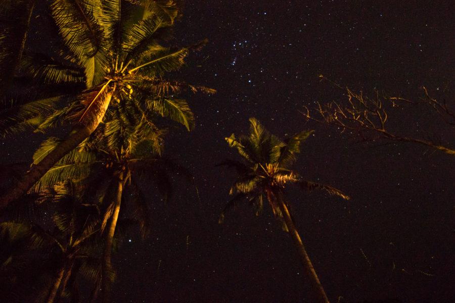 Stars through the palms