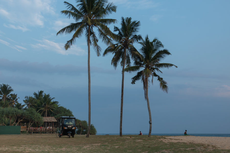 tuk tuk parked under 3 lone palm trees