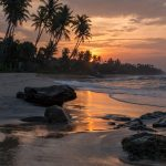 Sunset behind coconut palms over the beach, orange glow from the sun in the wet sand as the waves wash in