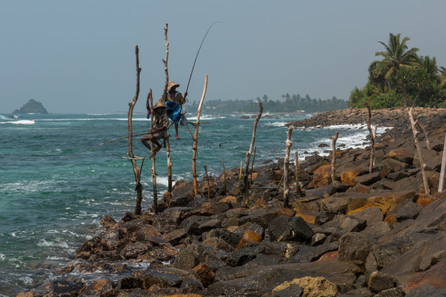 Sri Lankan fisherman fishing off the poles