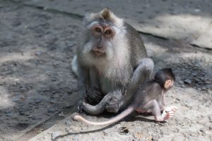 Baby baby monkey with its mum looking at the camera