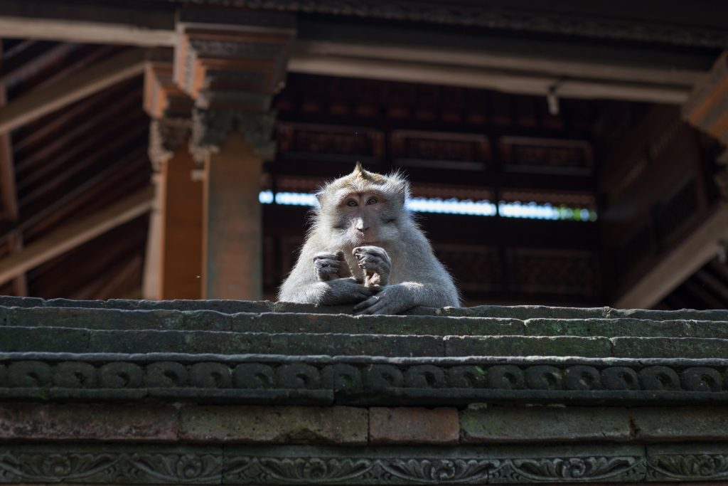 King monkey sitting atop the temple wall