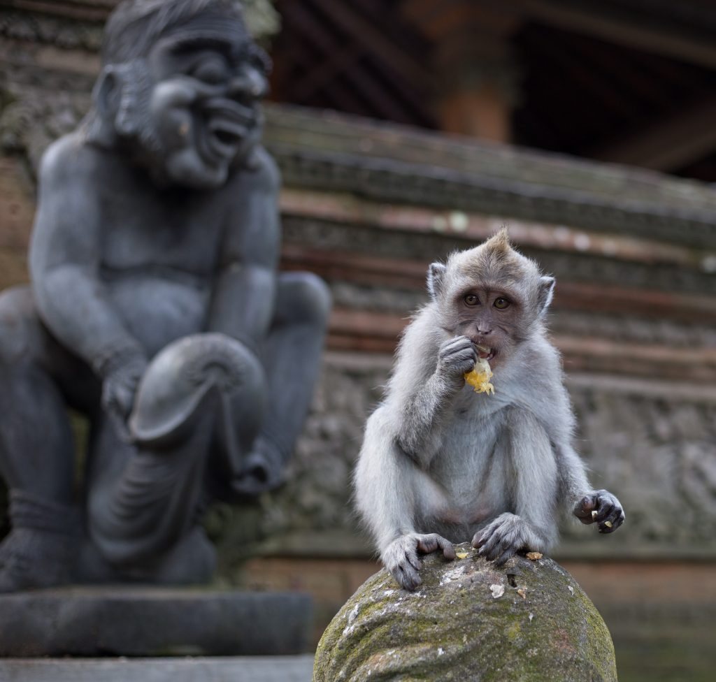 Monkey sitting on a statue eating a banana, big monkey statue behind